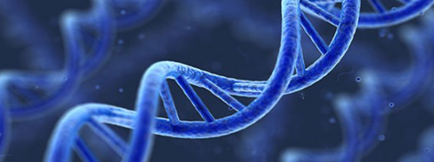 homosexuality and dna Researchers found distinct patterns of molecules which attach to dna to switch genes on and off were associated with homosexuality they claim to be able to predict whether someone is gay (illustrated) or straight with 70 per cent accuracy.