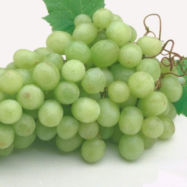 Grape seed can kill cancer cells